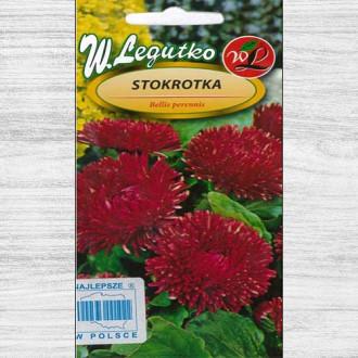 Bănuței cu flori mari roșii imagine 2