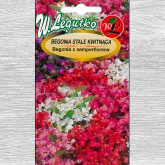 Begonie Gloria F1, mix multicolor imagine 4