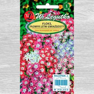 Brumărele de grădină stelate, mix multicolor imagine 2