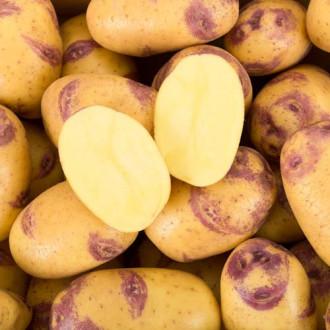 Cartofi de sămânță Blue Belle