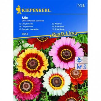 Crizantemă, mix multicolor imagine 1