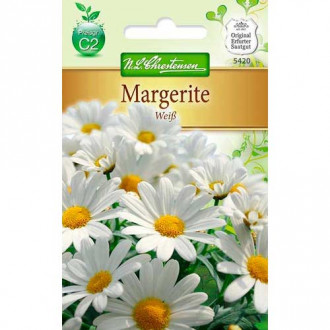 Crizantemă White