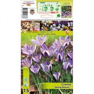 Brândușe Spring Beauty imagine 7