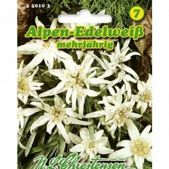 Floare de colț (Leontopodium alpinum) imagine 1