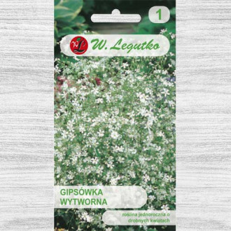 Floarea miresei (Gypsophila) albă imagine 2