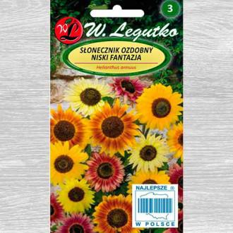 Floarea soarelui decorativă Fantasia, mix multicolor