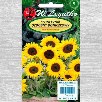 Floarea soarelui decorativă Polino Cola