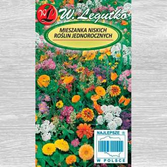 Flori anuale, mix multicolor 2 imagine 1