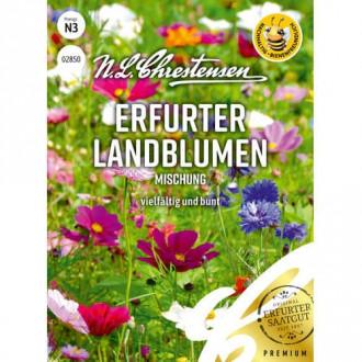 Flori de câmp Country Flowers, mix multicolor imagine 1