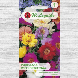 Flori de piatră, mix multicolor imagine 1