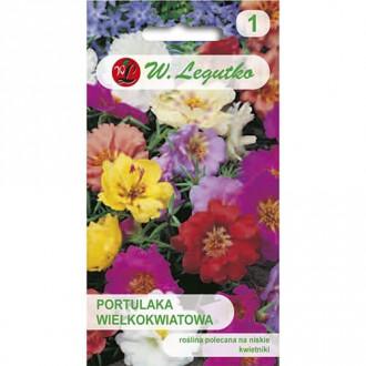 Flori de piatră, mix multicolor