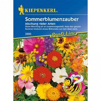 Flori de vară Magic, mix multicolor