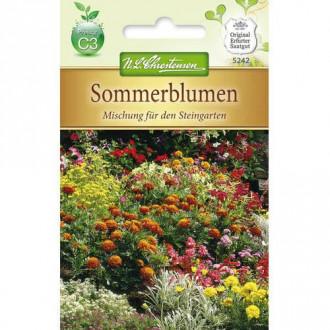 Flori de vară pentru stâncării, mix multicolor