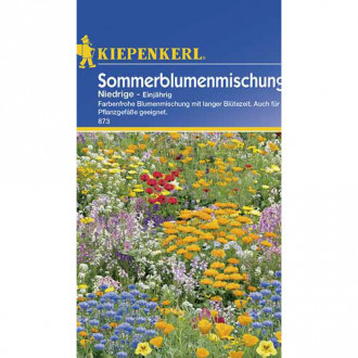 Flori de vară pitice, mix multicolor