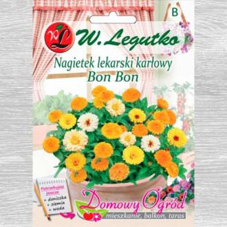 Gălbenele Bon Bon, mix multicolor