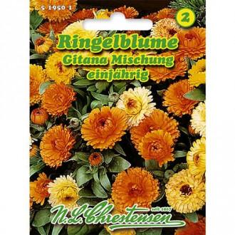 Gălbenele Gitana, mix multicolor imagine 8