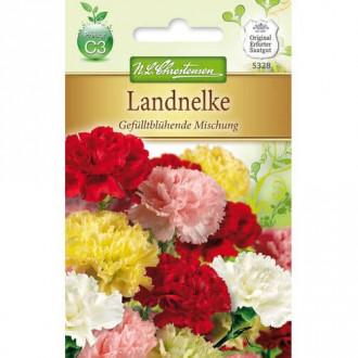 Garoafă de grădină cu flori duble, mix multicolor imagine 4