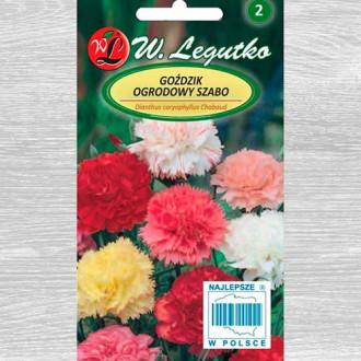 Garoafă de grădină Szabo, mix multicolor