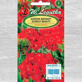 Garoafă turcească  Scarlet Beauty imagine 3