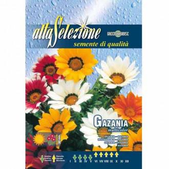 Gazania (Floarea comoară), mix multicolor imagine 1