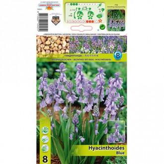 Clopoțel spaniol Blue imagine 2