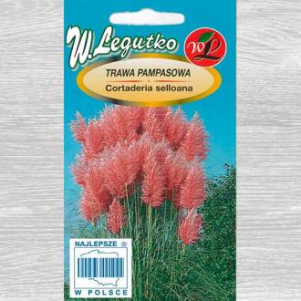 Iarbă de pampas roz imagine 2