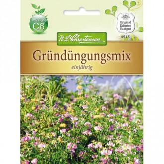 Îngrășământ verde Starter mix, amestec de plante anuale imagine 1