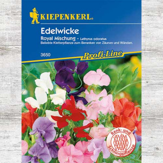 Lathyrus odoratus (Sângele voinicului) Royal, mix multicolor imagine 6