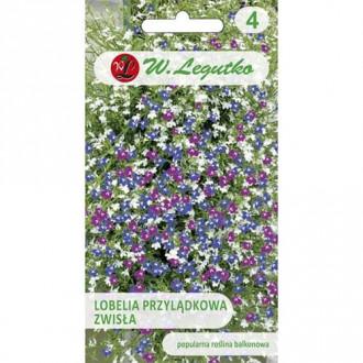 Lobelia curgătoare de ghiveci, mix multicolor imagine 4
