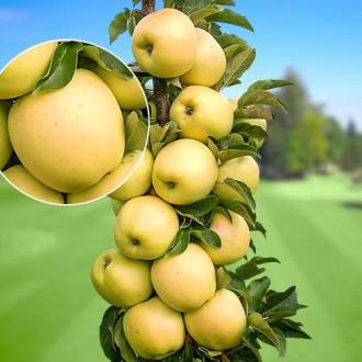 Măr columnar Bolero imagine 5