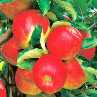 Măr Jonagold imagine 2
