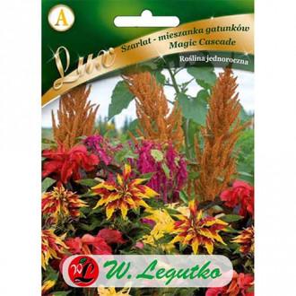 Moțul curcanului (Amaranthus) Magic Cascade imagine 1