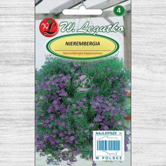 Nierembergia albastră
