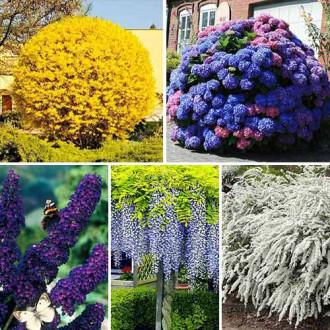 Super ofertă! Plante ornamentale Grădina înfloritoare, set de 5 soiuri