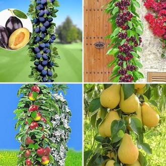 Super ofertă! Pomi columnari Livada de acasă, set de 4 soiuri imagine 5