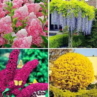 Super ofertă! Plante ornamentale Grădina colorată, set de 4 soiuri