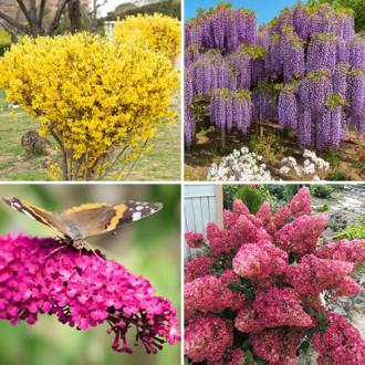Super ofertă! Plante ornamentale Grădina colorată, set de 4 soiuri imagine 1