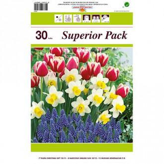 Super ofertă! Lalele, Narcise și Muscari, set de 30 de bulbi imagine 1