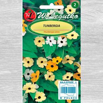 Thunbergia, mix multicolor