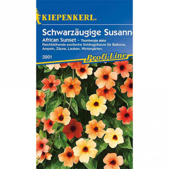 Thunbergia Susanne African Sunset imagine 1