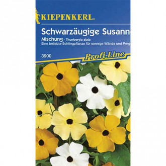 Thunbergia Susanne, mix multicolor imagine 3