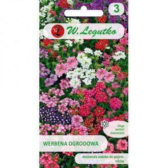 Verbena de grădină, mix multicolor imagine 1