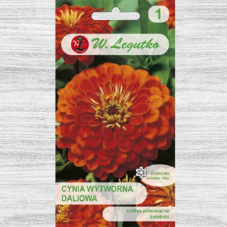 Zinnia (Cârciumăreasă) Orange King imagine 8