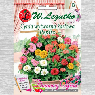 Zinnia Pepito, mix multicolor imagine 1