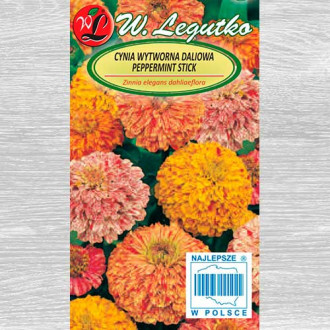Zinnia Peppermint Stick, mix multicolor imagine 3