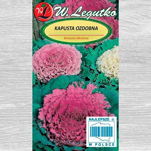 Varză decorativă, mix multicolor imagine 1 articol 69596