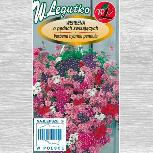 Verbena curgătoare, mix multicolor imagine 1 articol 69639