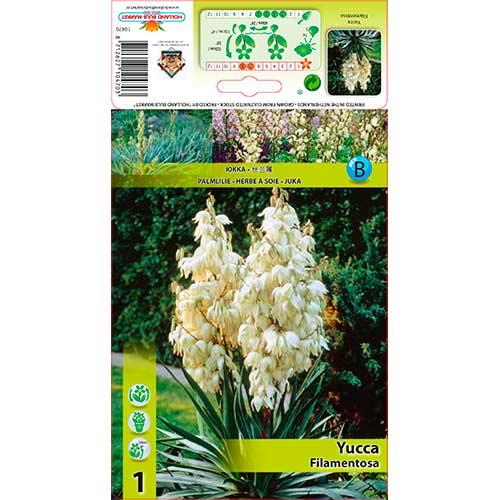 Yucca Filamentosa imagine 1 articol 76366
