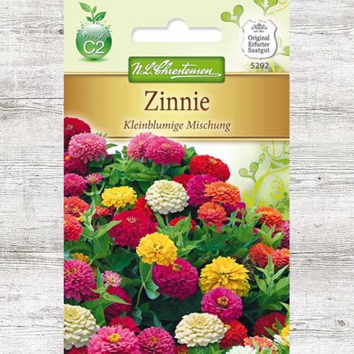 Zinnia (Cârciumăreasă) pitică, mix multicolor imagine 1 articol 78949