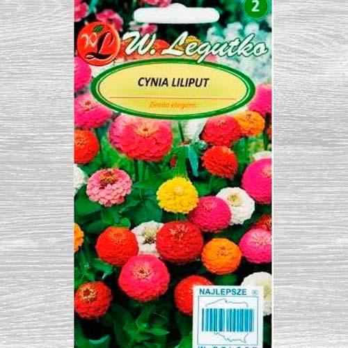 Zinnia Liliput, mix multicolor imagine 1 articol 69578